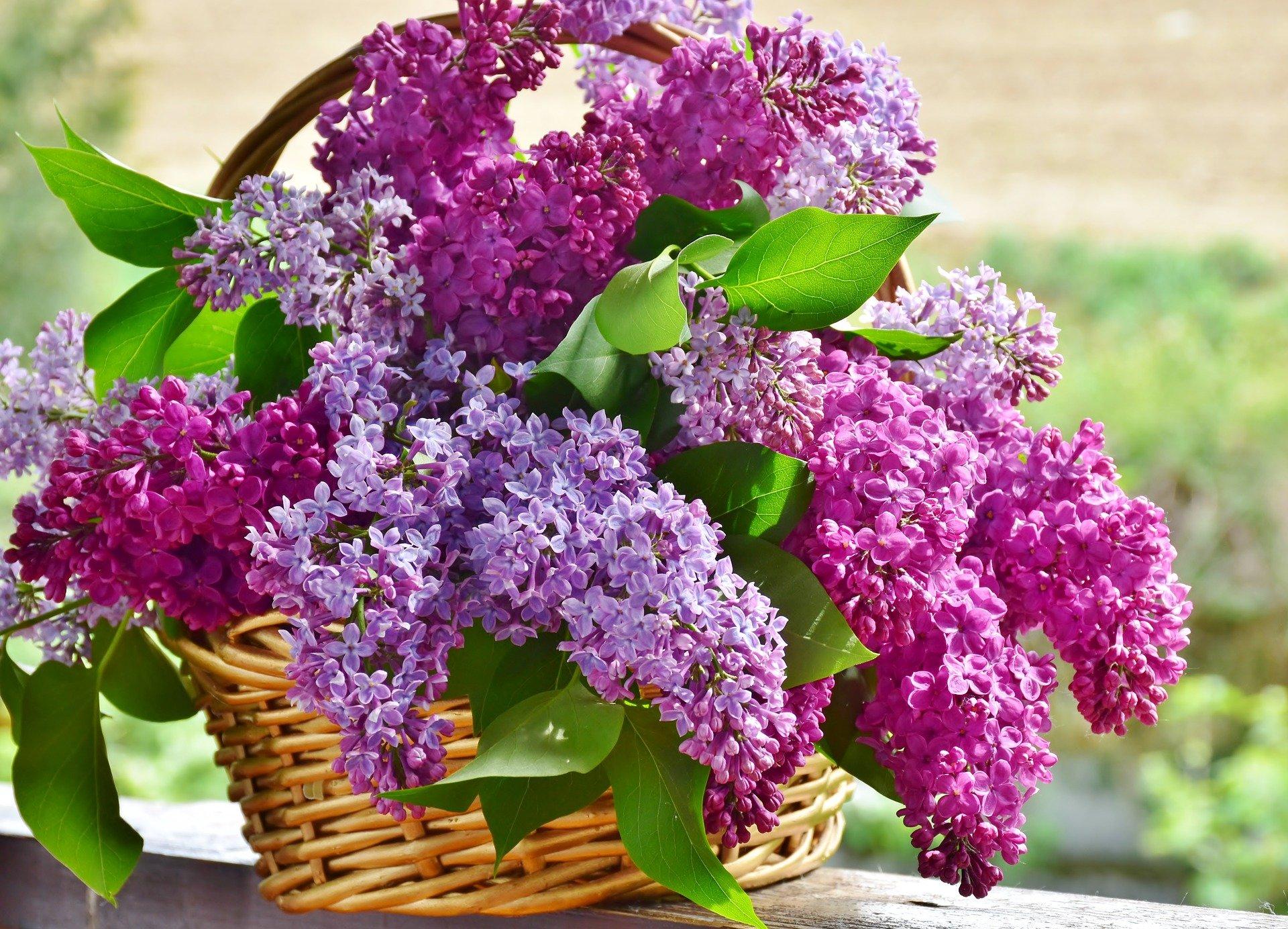 紫色の花のバケット
